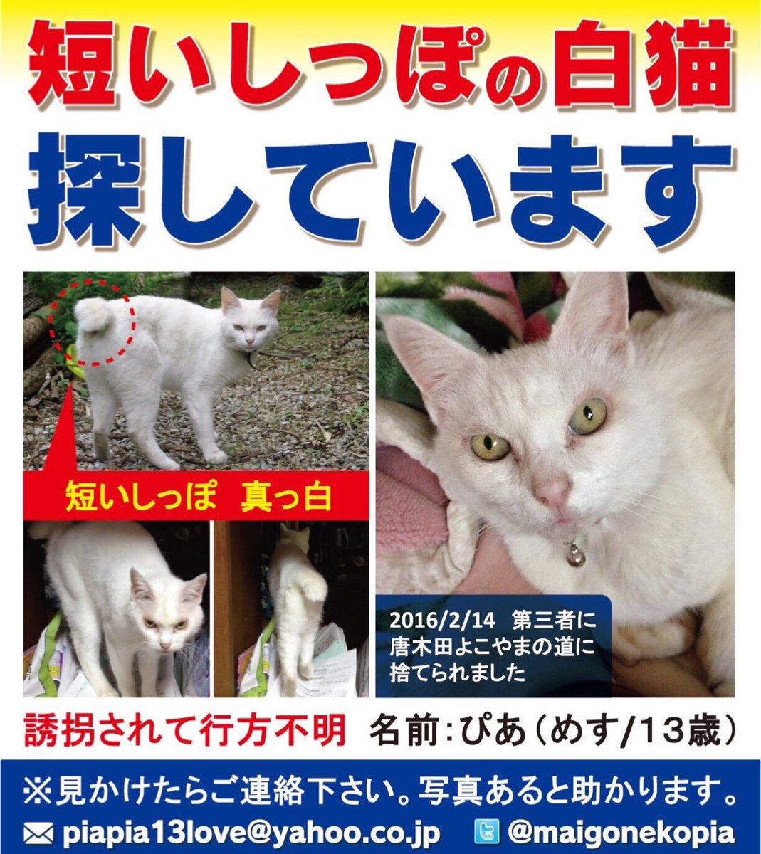 RT@maigonekopia  #拡散希望 近所の住民に自宅から4km離れた場所に遺棄された愛猫を探してます。  八王子市別所周辺で「人なつこい、若くない、尻尾短い、真っ白、目が黄緑色」の猫が目撃され本猫の可能性高いです。餌をあげてる、保護している人がいたらご連絡下さい https://t.co/6kAvCVpbkY