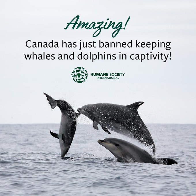 Alarm: Whales and dolphins are facing the risk of being unable to reproduce