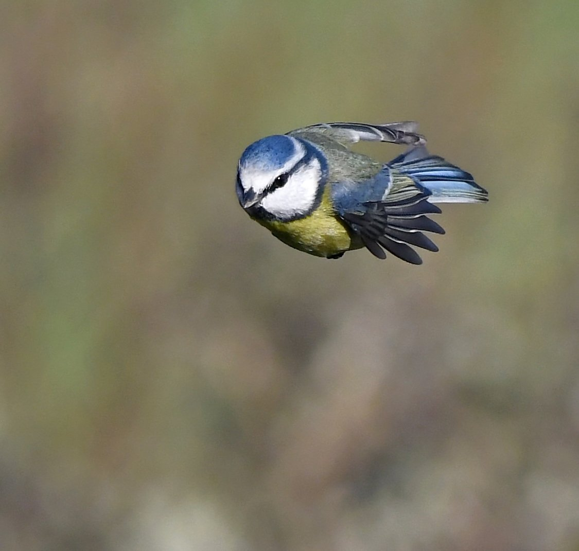 Never fear...... Super Tit to the rescue!!!! 😁🐦