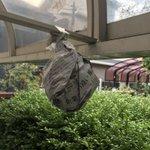 アシナガバチに巣を作らせない方法。巣に似た何かを吊り下げる