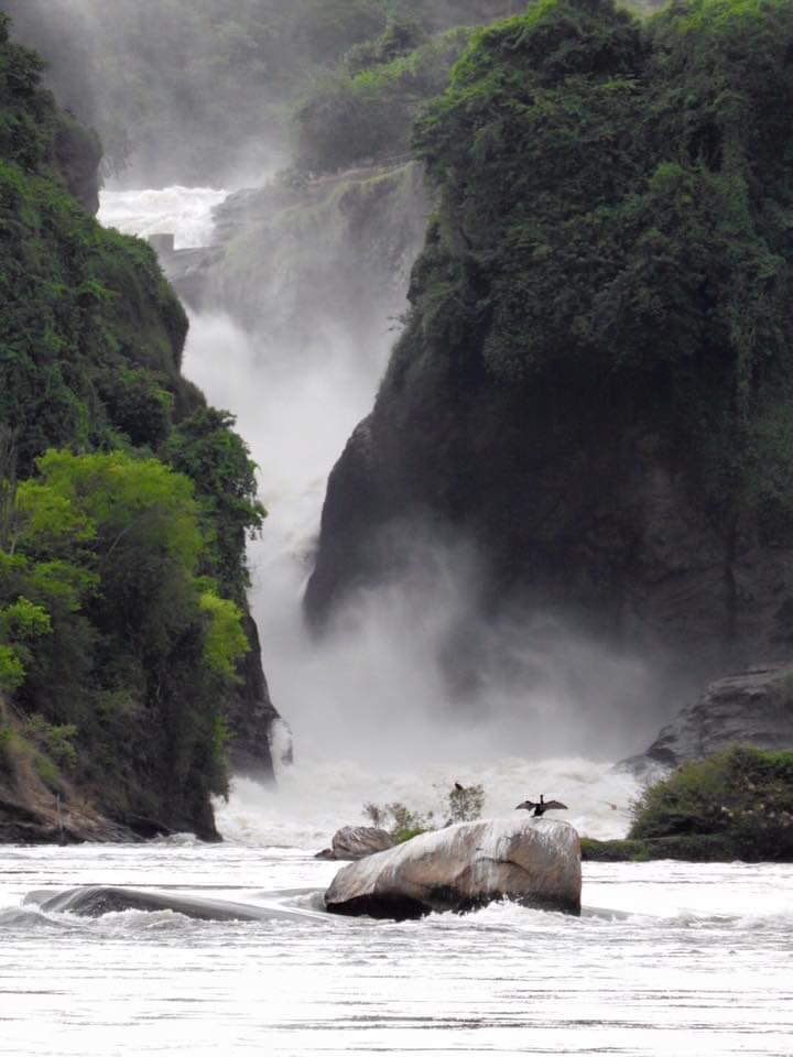 The reason developed countries leave spaces for green parks is not because they have no buildings or roads to construct on them, it's because some spaces define the history of their countries and the benefits are intrinsic. We need to save Murchison Falls. #SaveMurchisonFalls