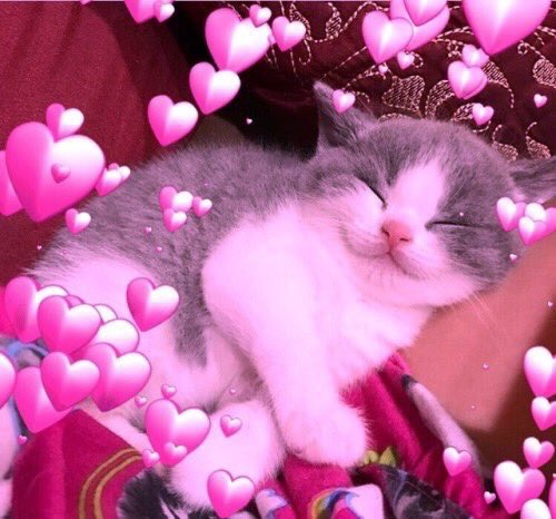Картинки котики с сердечками над головой