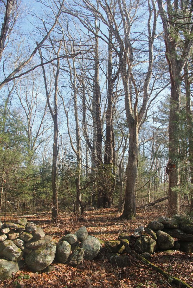 Historic stone walls dot this newly-preserved property in Charlestown.
