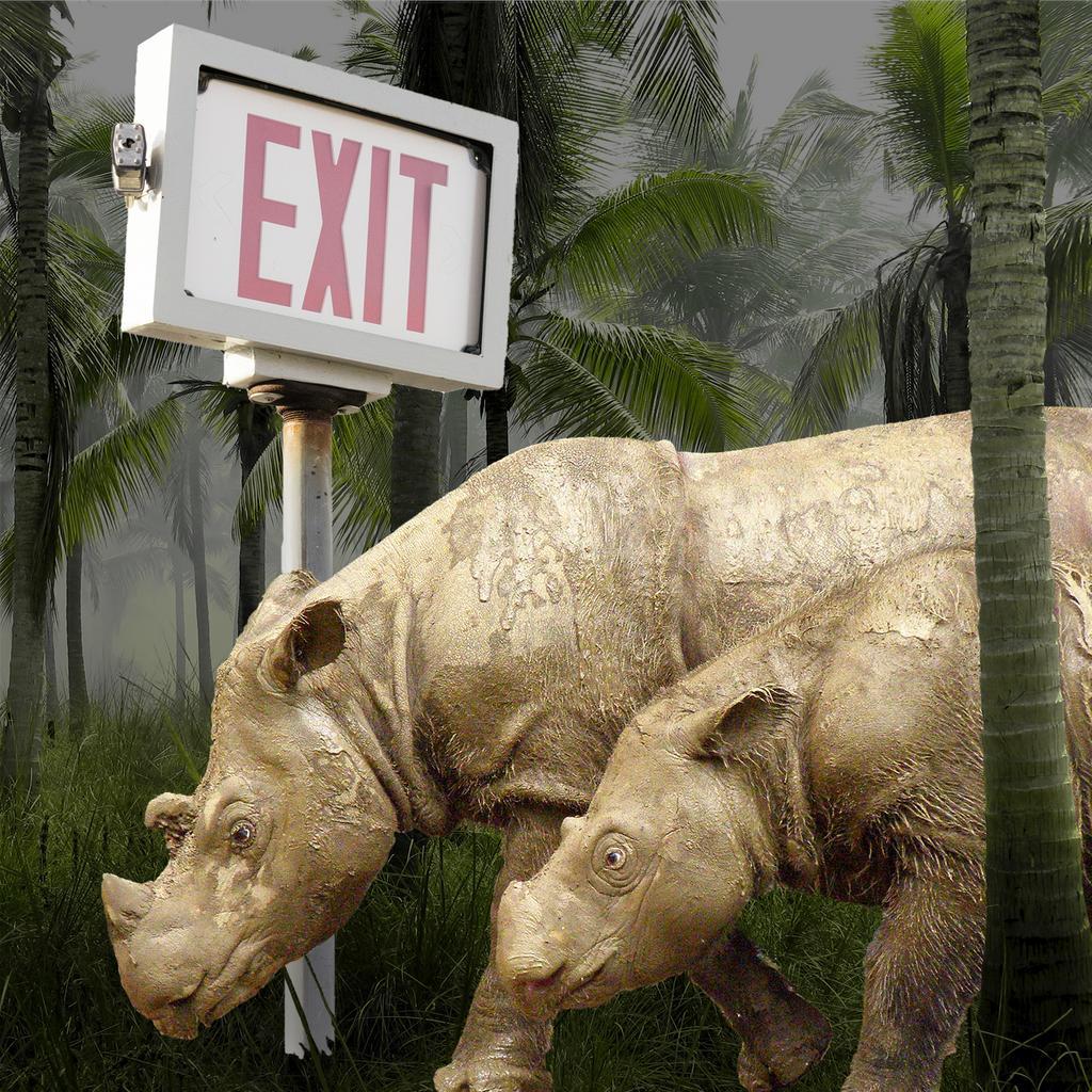 Malaysia's last male Sumatran rhino died in May, leaving just one sole survivor of the species. Fewer than 80 members left across the islands of Sumatra and Borneo. #rhino #saverhinos @savetherhino @RhinosIRF @savingrhinos @SaveOurRhinoK9 @KeepRhinosAlive @HelpingRhinos