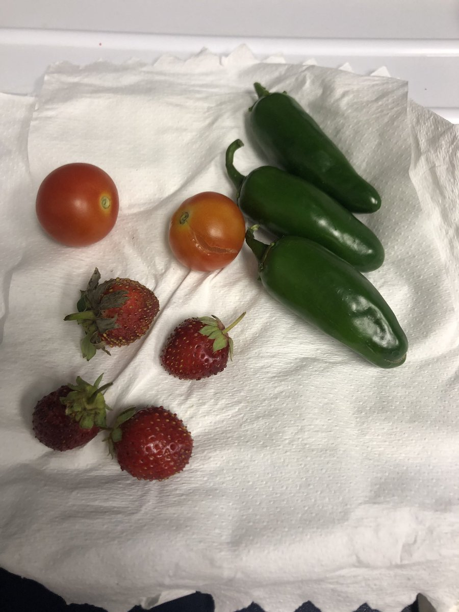Some of the harvest from our outdoor classroom and garden! @jenkscsis @sportsfanCS #ourWHY #powerofpositivity