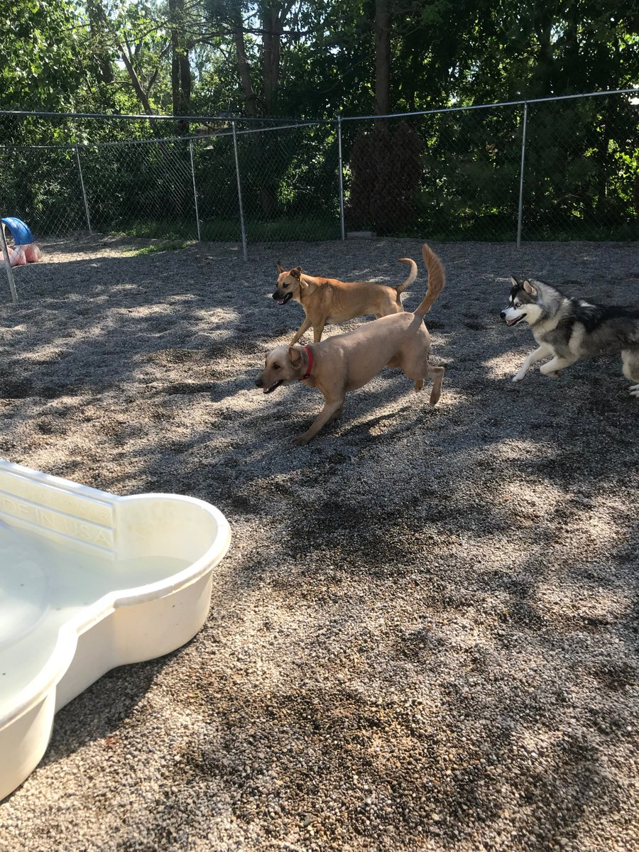 Leeloo, Gia and Zoe J race for the pool