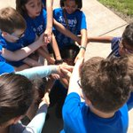 Image for the Tweet beginning: TEAMBUILDING! Sward fifth graders solidifying
