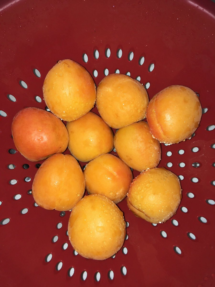 @gelsonsmarkets Do you have Velvet Apricots, like the picture below, or Peacharines?