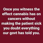 Image for the Tweet beginning: @SilERabbit #Cannabis #THC destroys mutated