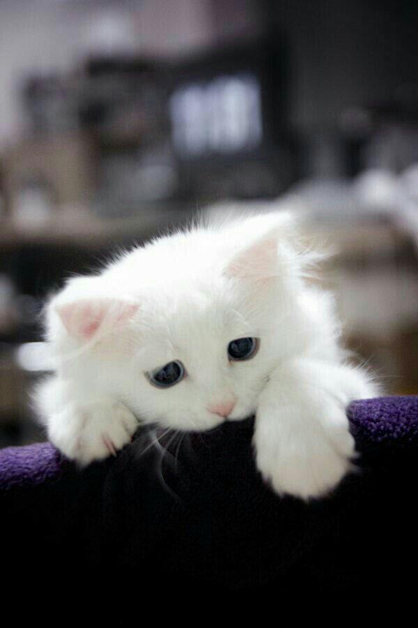 актер картинки грустный котенок последнее время моде