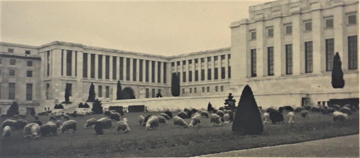 #DYK? A flock of sheep is usually lent to graze in the 35 hectares park of the Palais des Nations for its maintenance. This is part of the environment-friendly solutions undertaken for decades by @UNGeneva. Look at this picture from the 30s! #Multilateralism100 #UNOGArchives