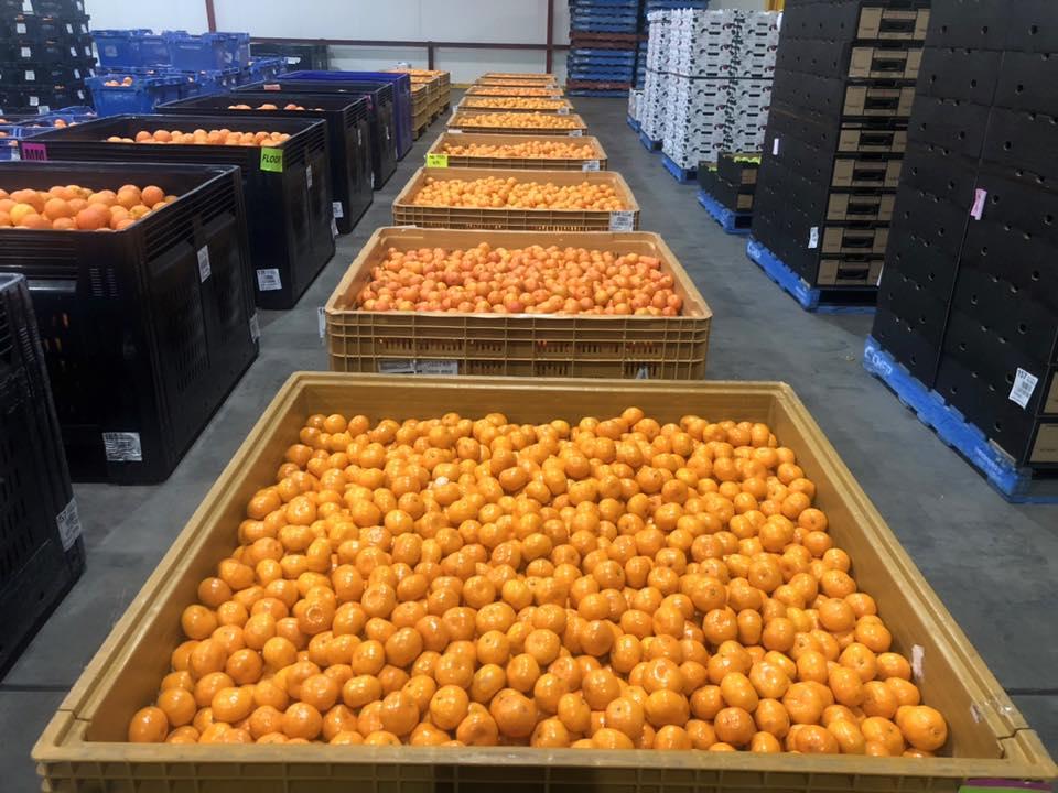 Fresh WA Mandarins, now in season. @buywesteatbest @livelightercampaign