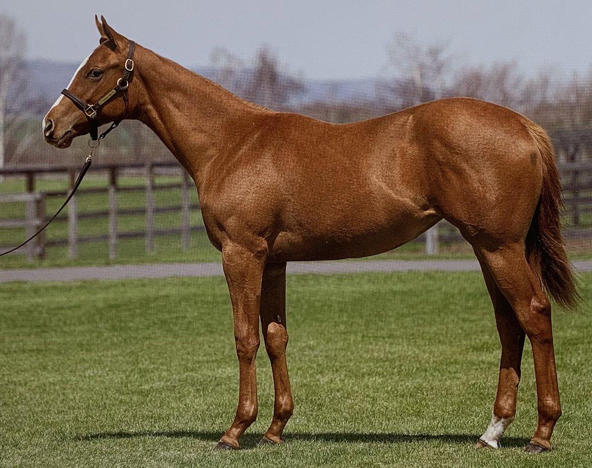 【社台地方オーナーズ  2019募集馬】  No.308  ハッピーウェーブの18(父サウスヴィグラス)  5月生まれですし、まだまだ幼い身体つき。父の産駒にしてはゴツゴツしておらずシャープな馬体です。 肩の角度も良く、気が悪そうな目つきも茶目っ気あります。 #競馬  #地方オーナーズ
