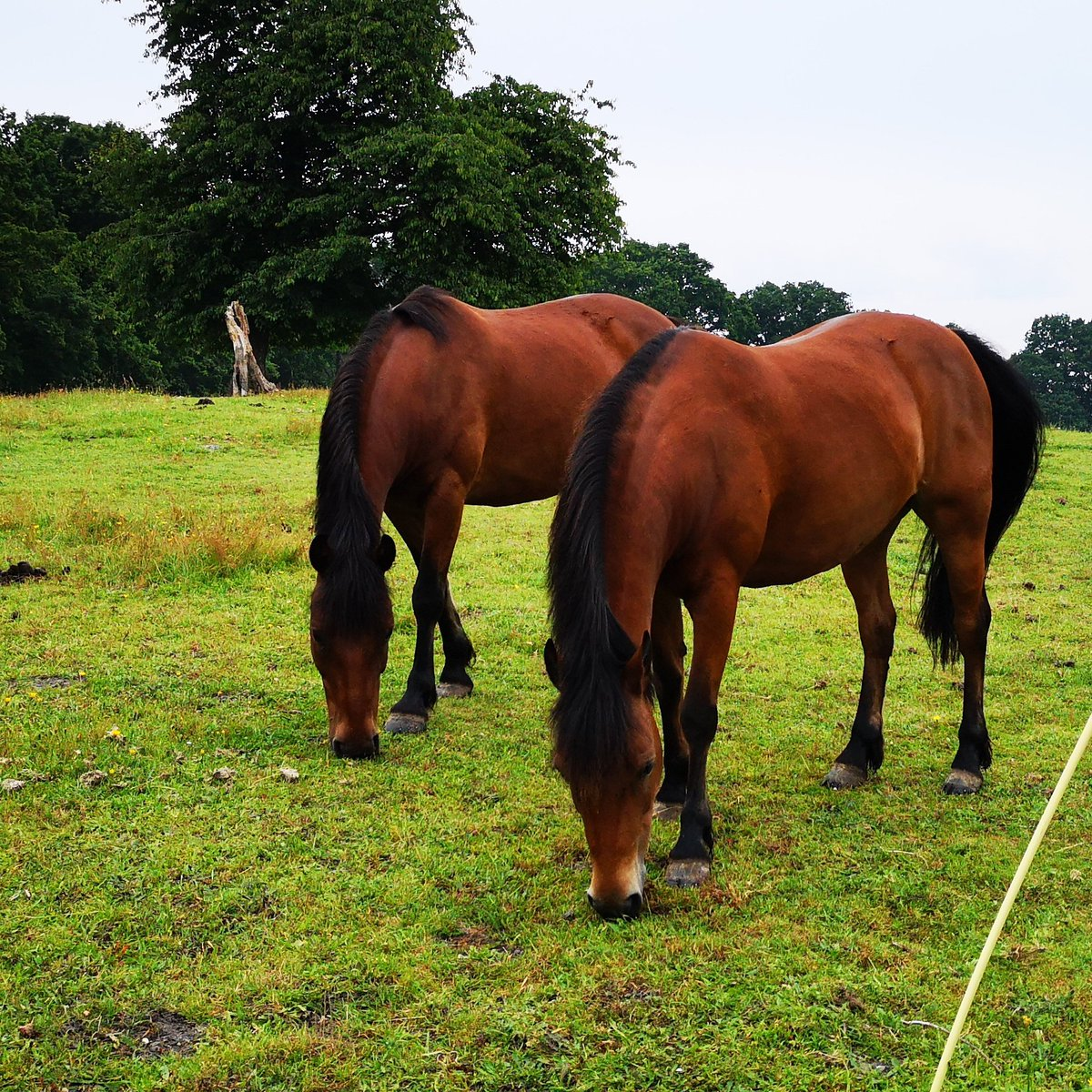 Love our matching ponies! Both of these were born on the #NewForest and are now super performance #ponies.