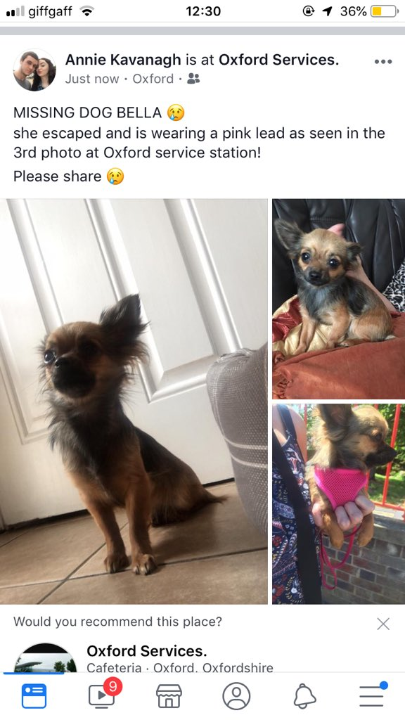Urgent #MISSING #DOG BELLA escaped at #oxford service station an hour and a half ago - photo attached of her at station - please please keep your eyes open for Bella ! @annie_kav<br>http://pic.twitter.com/F0K9ACQZG6
