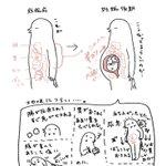妊婦と内臓。かわいいイラストでつらさとかわいさが表現されています。