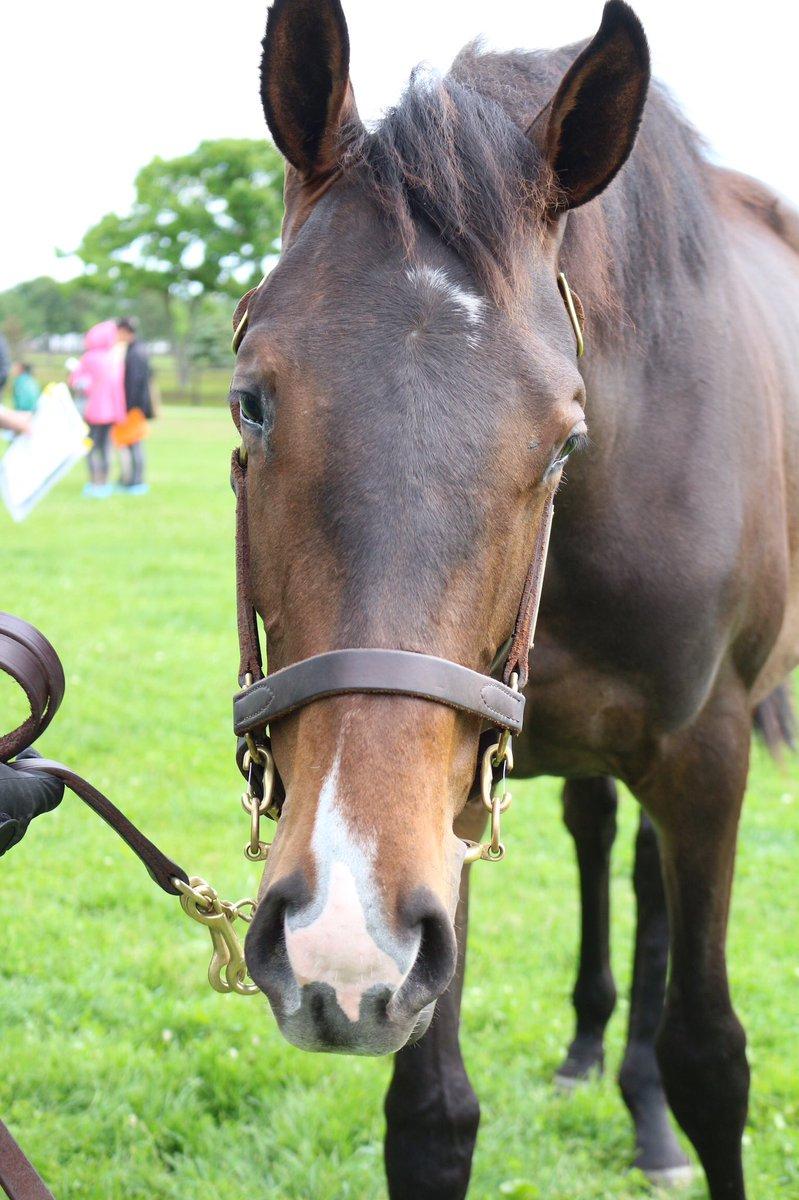 メジャーエンブレムの18(父ルーラーシップ)。母は阪神JF(GⅠ)、NHKマイルカップ(GⅠ)、クイーンカップ(GⅡ)を優勝、JRA賞最優秀2歳牝馬。  初仔ということもあり、メジャーエンブレム出資者の方々に囲まれて、可愛い可愛いとずっと撫でられていた😊  #社台春ツアー2019