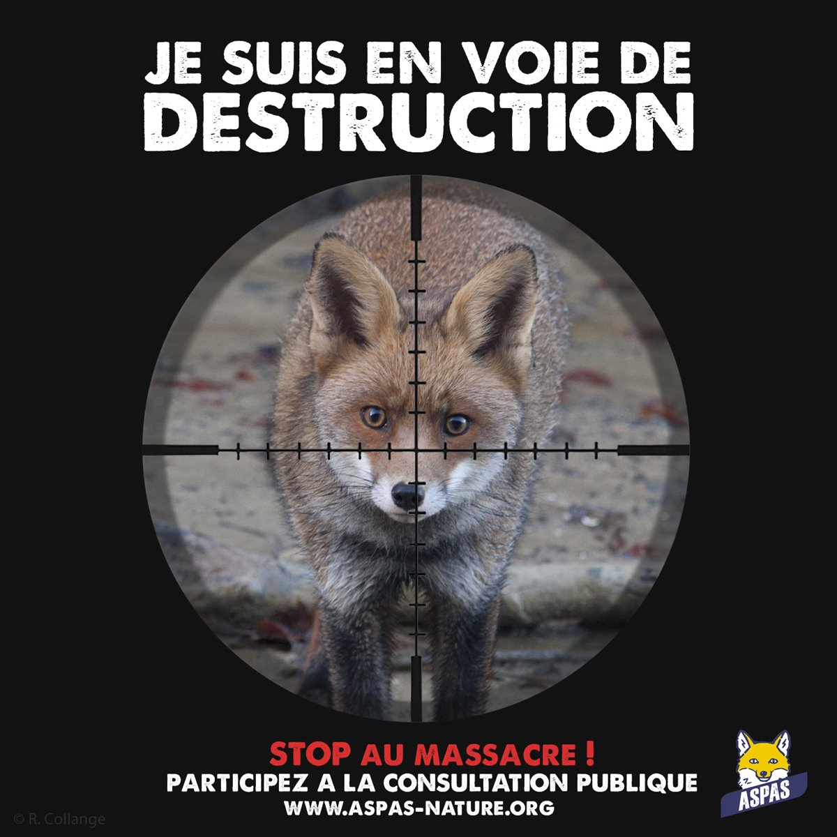 ⚠️PARTICIPEZ AVANT LE 27 JUIN ! 👉bit.ly/2IoPEqW Le #renard figure sur la nouvelle Liste de la Mort en projet de @Min_Ecologie. Et ce malgré toutes les études qui démontrent le rôle écologique et sanitaire du petit canidé sauvage, meilleur allié des agriculteurs...
