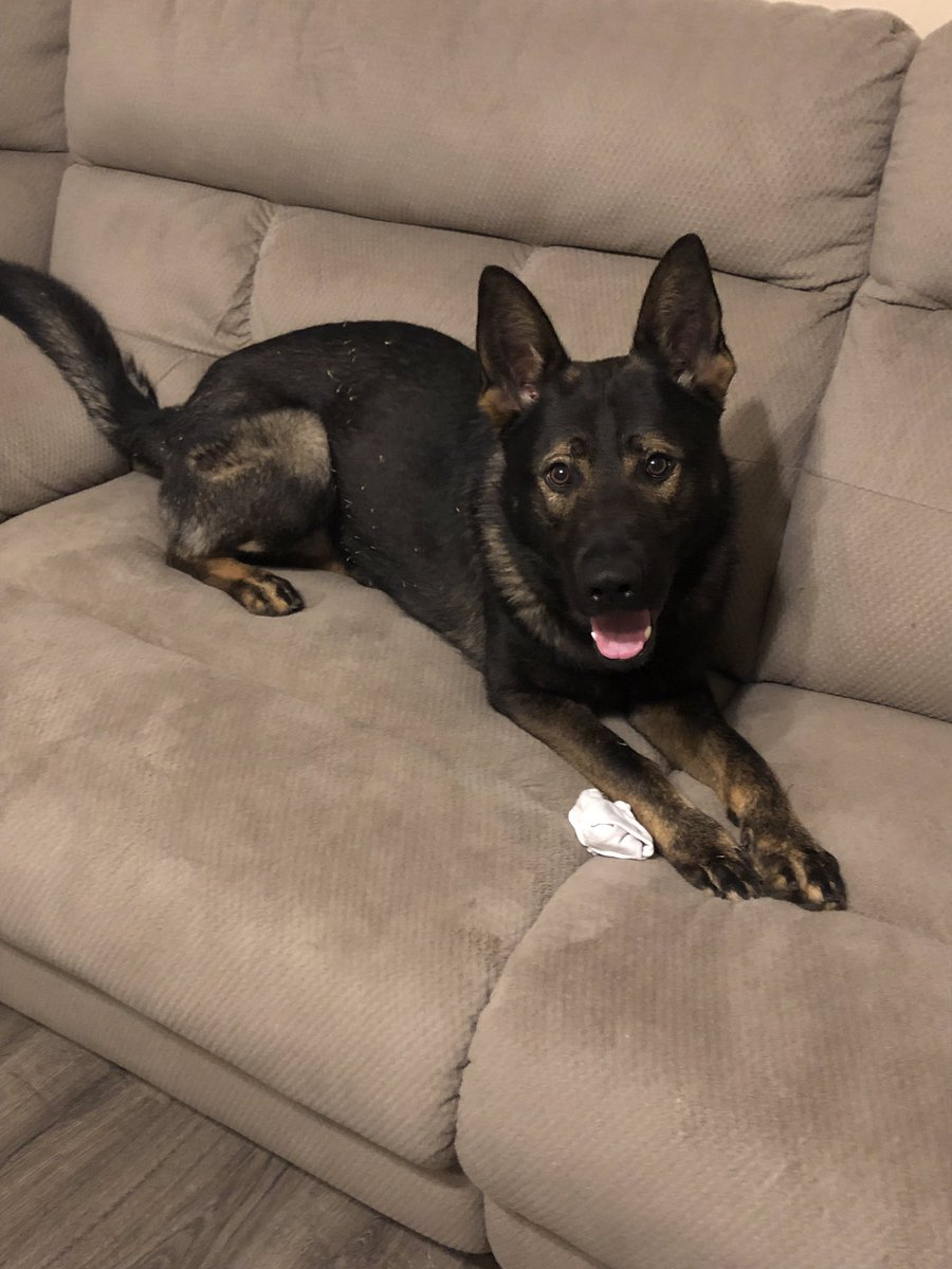All 3 winners for both giveaways will be announced early evening.   In the meantime, here's K9 Bane, The Sock Thief, with more of his sock thievery.  #bluepawsmatter #k9 #backthebark #livepd <br>http://pic.twitter.com/NT4pUba5cv