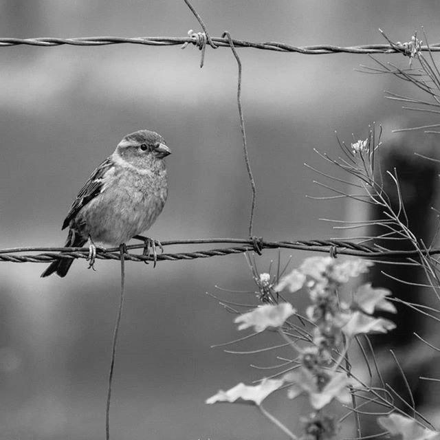 #blackandwhite #photography #bird #oiseau #monochrome #bnw #bw https://t.co/l3e5TvzAps