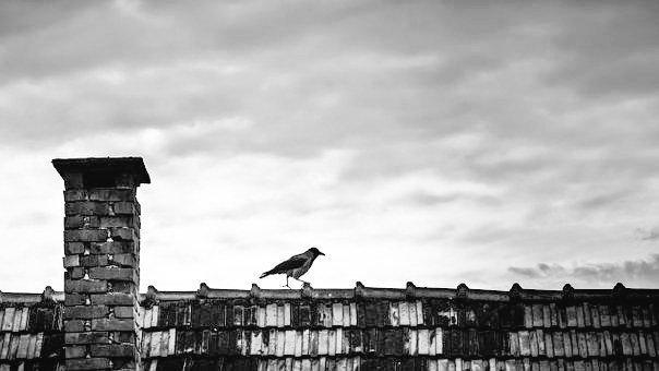 #blackandwhitephotography #bird #oiseau #monochrome #bnw #bw https://t.co/vLnkH6k01j