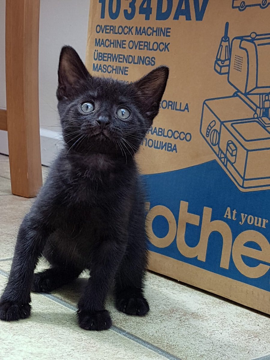 This is baby Obe. He's an 8 week old  tiny panther and we are so in love with him already, it is unbelievable. We are convinced he will find a home really quick, he is so cute!! #mondaythoughts #blackcats #KITTEN #Yorkshire #AdoptDontShop<br>http://pic.twitter.com/bh1Yqngxqm