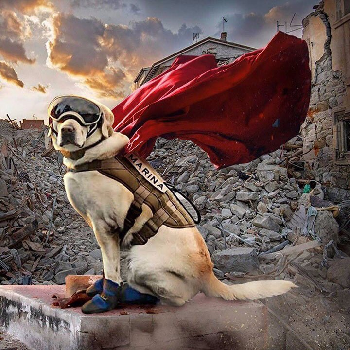 Today Frida, the heroic Mexican Navy rescue dog, retires. She saved many lives and during the Mexico City earthquake of 2017, she became a national hero and symbol of hope.  GRACIAS FRIDA!  <br>http://pic.twitter.com/TJtdk3iU0F