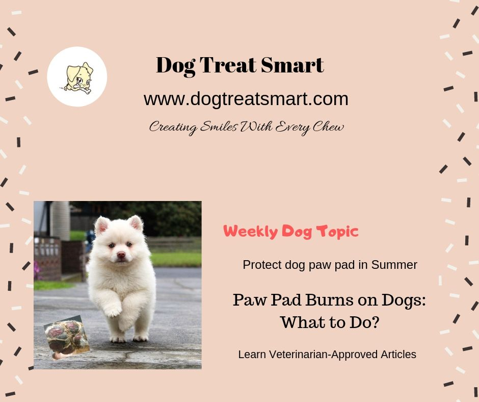 Vet issues summer walk warning after treating dog with burned off paw pads. Visit http://www.dogtreatsmart.com for #WeeklyDogTopic. #DogHealth #WeLoveDog #DogTopic  #VetTalk #HelpTip #GoodVibesOnly #dogwalking #PuppyCouple #Repost @ThinkBeyondPit @TomPoole007