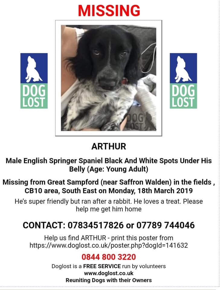 COME HOME ARTHUR Facebook Page-ARTHUR MISSING Male Spaniel Missing From Essex since 18/3/19 WHERE IS ARTHUR PLEASE? @vincerock7 #findArthur  @bunnylondon39 @sharry1972 @judysale23 @lisaphipps15 @HunnyJax @Cymru_01 @Eloquencealways @KarenFi51820768 @SteelCherry<br>http://pic.twitter.com/BbOlKbmtEt
