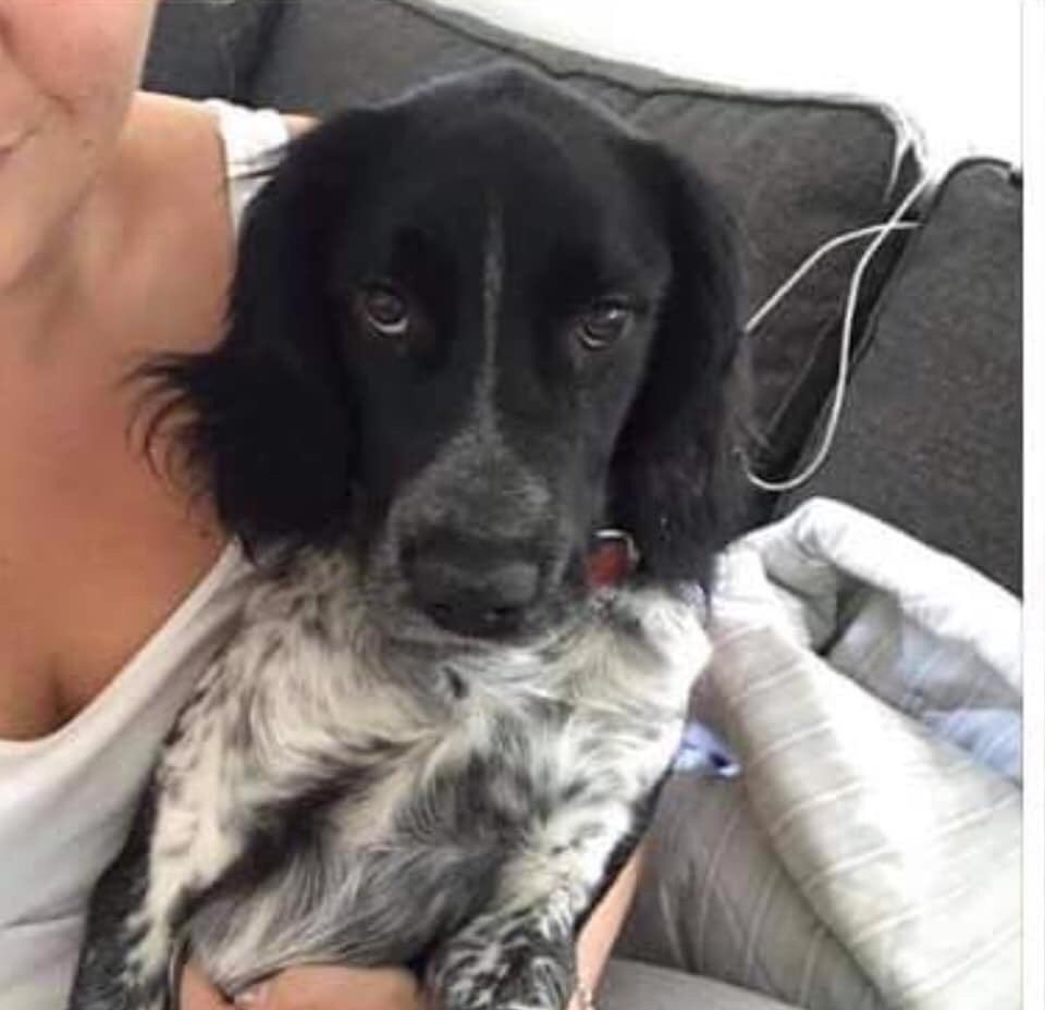 #findArthur  Where did ARTHUR disappear to  Does anyone know the area? #SaffronWalden he ran off chasing a rabbit  but what then DOGS DONT JUST VANISH  did someone take him in with intentions to get him home, fall in love with his cheeky face #CB10  https://www. doglost.co.uk/dog-blog.php?d ogId=141632   … <br>http://pic.twitter.com/Fv8QeYxKwb