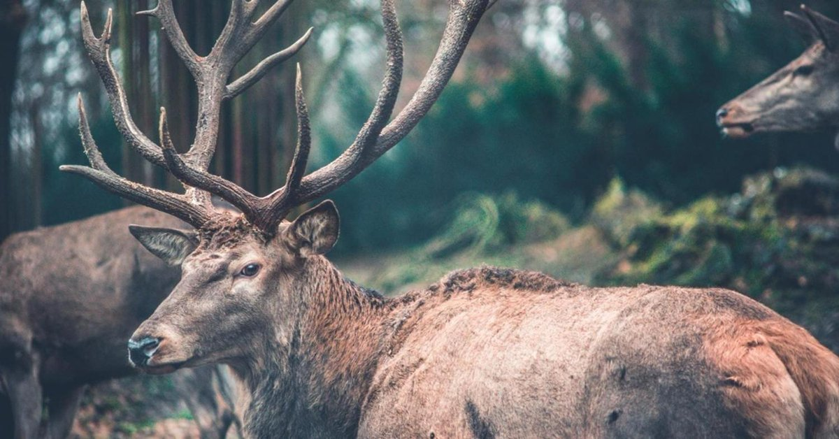 Deer antlers are a 'controlled' form of bone cancer growth http://bit.ly/2WXUIXb