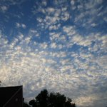Image for the Tweet beginning: #Altocumulus boven #Dadizele. #vrtweer #weerpraatje