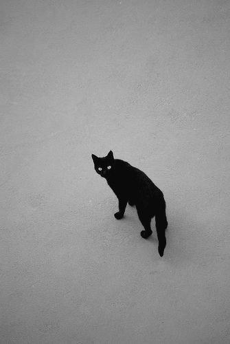RT @Marydrina: #blackandwhitephotography #cat #chat #monochrome #bnw #bw @RabalFrancesco 💙 https://t.co/ZhQGB4ZJhv