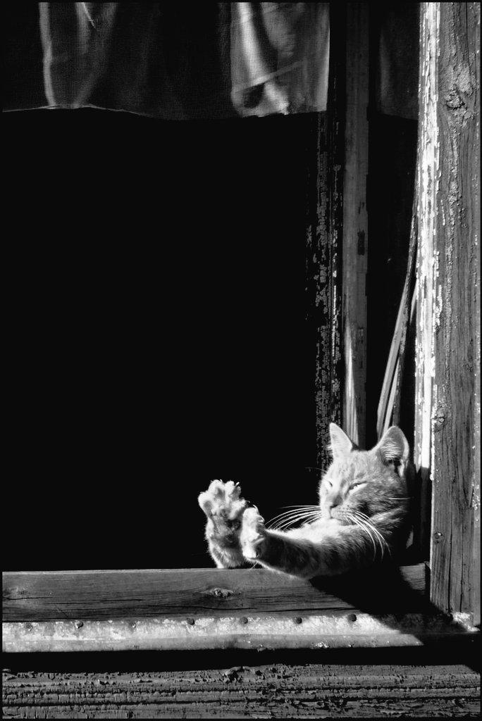 RT @Marydrina: #blackandwhitephotography #cat #chat #monochrome #bnw #bw @sniaguasch3 💙 https://t.co/qYtN2C9L3r