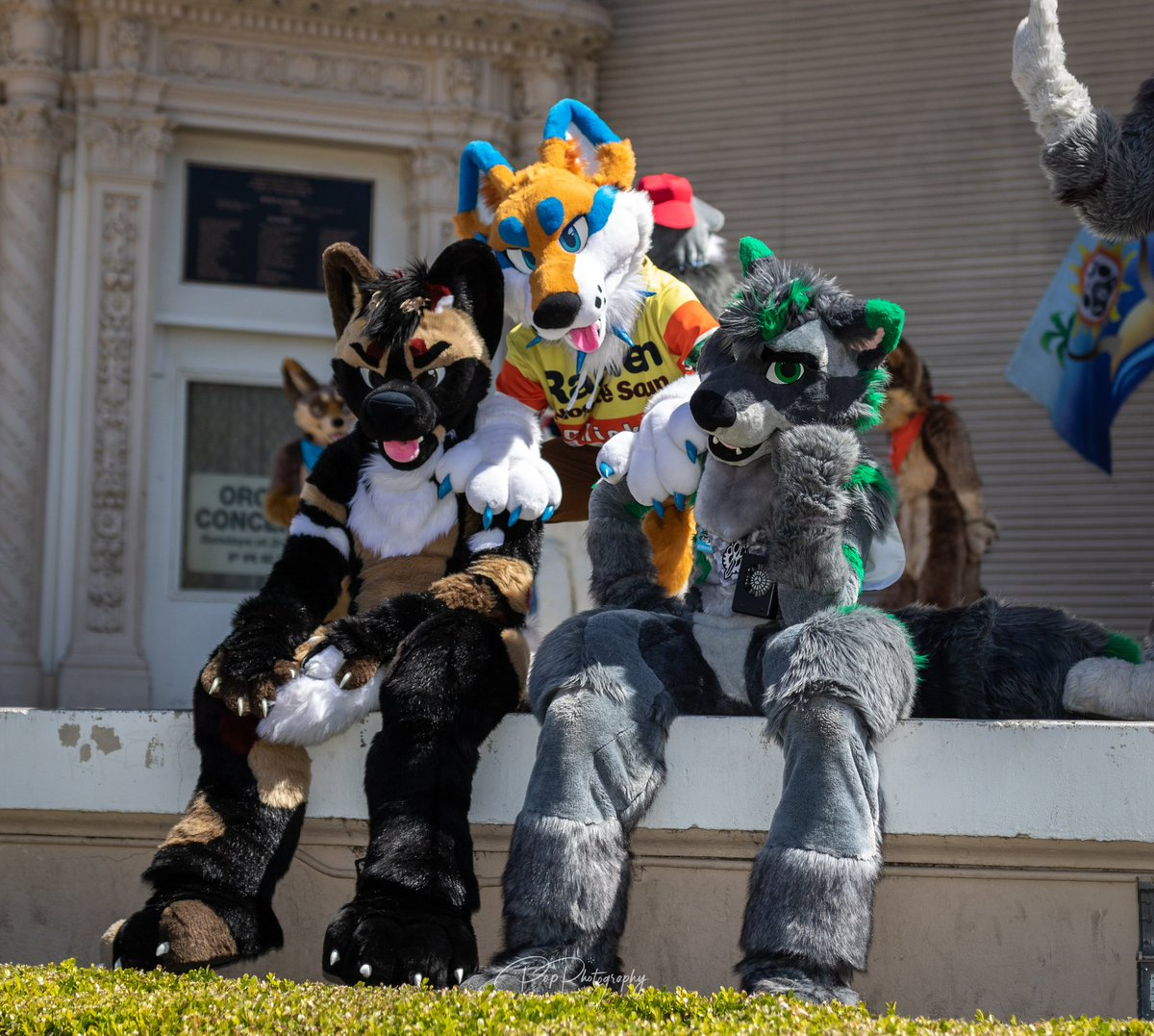 Are we all we bunch of good boys? I think so   :@BooblesFennec  #Furry #FurryFandom #Fursuit #Fursuiter #Fursuiting<br>http://pic.twitter.com/M7GNZLqc20