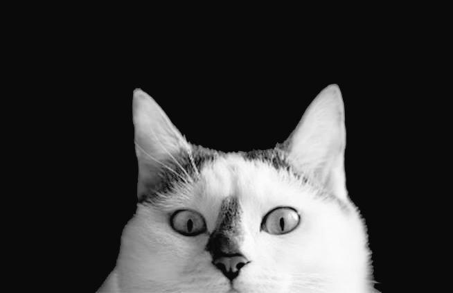 RT @Marydrina: #blackandwhitephotography #cat #chat #monochrome #bnw #bw https://t.co/skzfSN6DYp