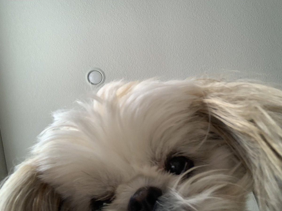 Hi frends. I took a selfie. Hope you like it. Mingxi  #DogsOfTwitter #MingxiTzu #MondayMood #selfie<br>http://pic.twitter.com/MglwlZj14E
