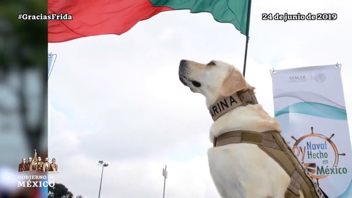 Este #DíaDelRescatista rendimos homenaje y agradecemos a quienes ejercen la noble labor de salvar vidas.  ¡Y despedimos a Frida 🐕! Hoy se retira del servicio activo para dedicarse al entrenamiento.  Los binomios caninos nos recuerdan que siempre hay esperanza.  #GraciasFrida♥️🇲🇽