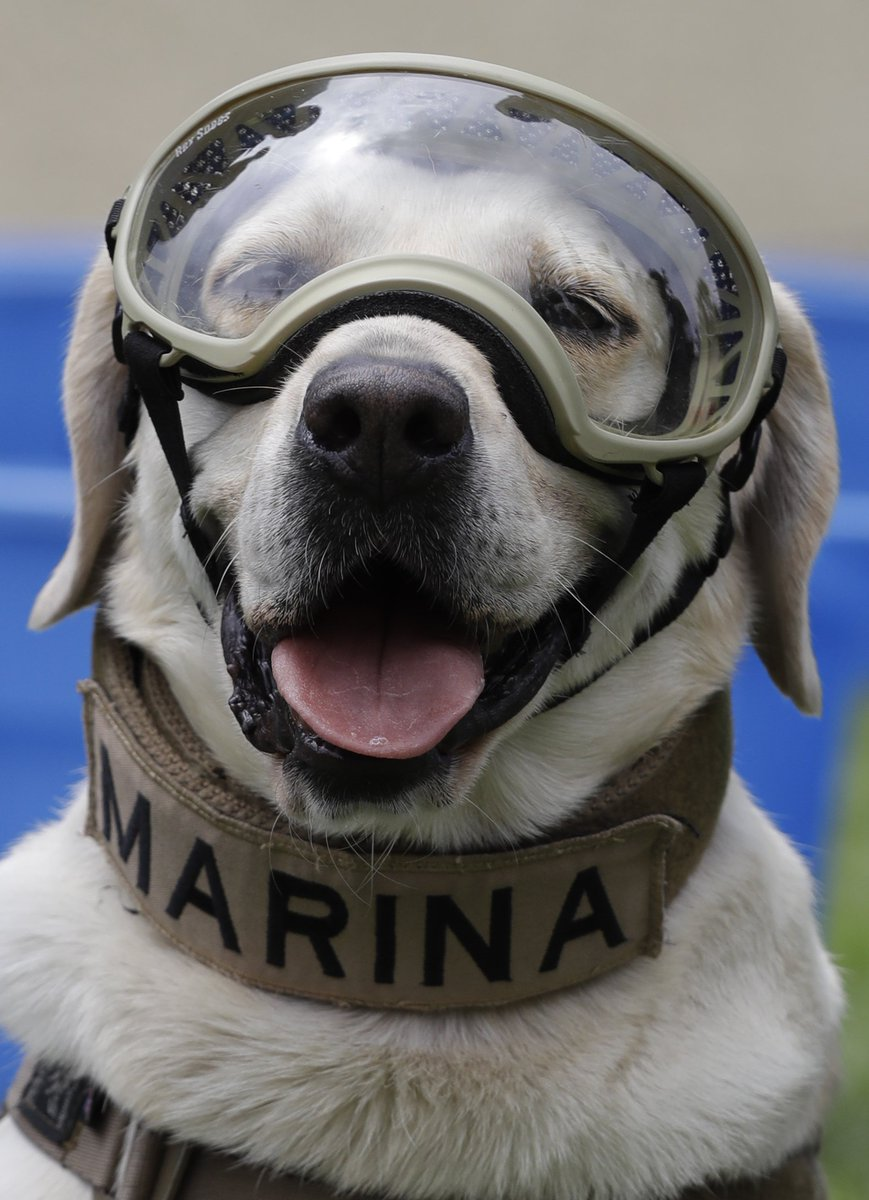 Frida, the Mexican rescue dog who saved 12 people after natural disasters and became famous after the 2017 Mexico City earthquake, is retiring from duty today. The Mexican navy honored her on her last day.  <br>http://pic.twitter.com/NfQRPwvoel