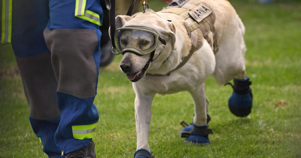 Frida the rescue dog — who became a symbol of hope after deadly Mexico earthquake — retires  https:// cbsn.ws/2Nb4F3X    <br>http://pic.twitter.com/LbTgVztPuj