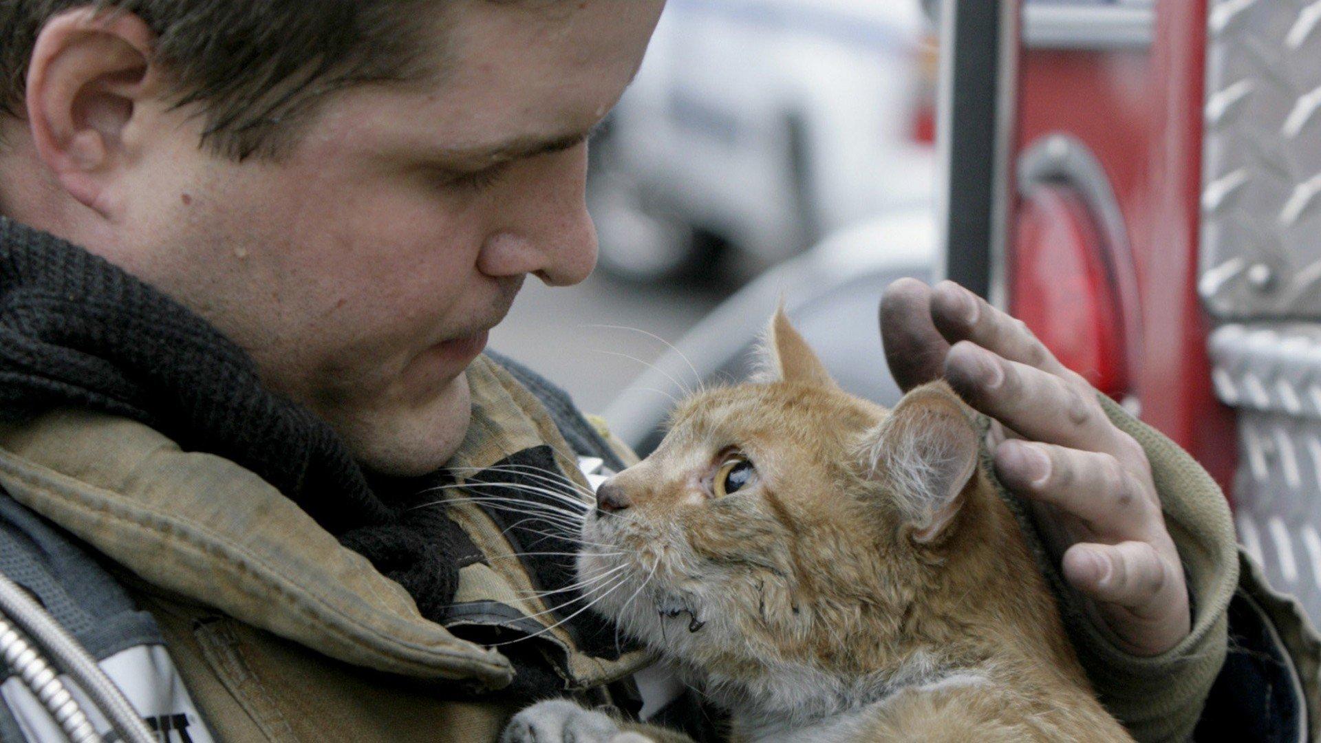 точку спасите кошек картинка один старейших городов