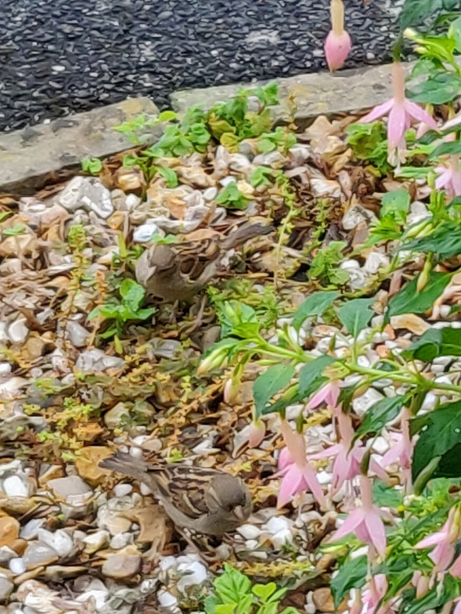 RT @PoetSimon: I'm so lucky with the amount of birds I get around my house #nature #garden #birds https://t.co/pdehGNfWJn