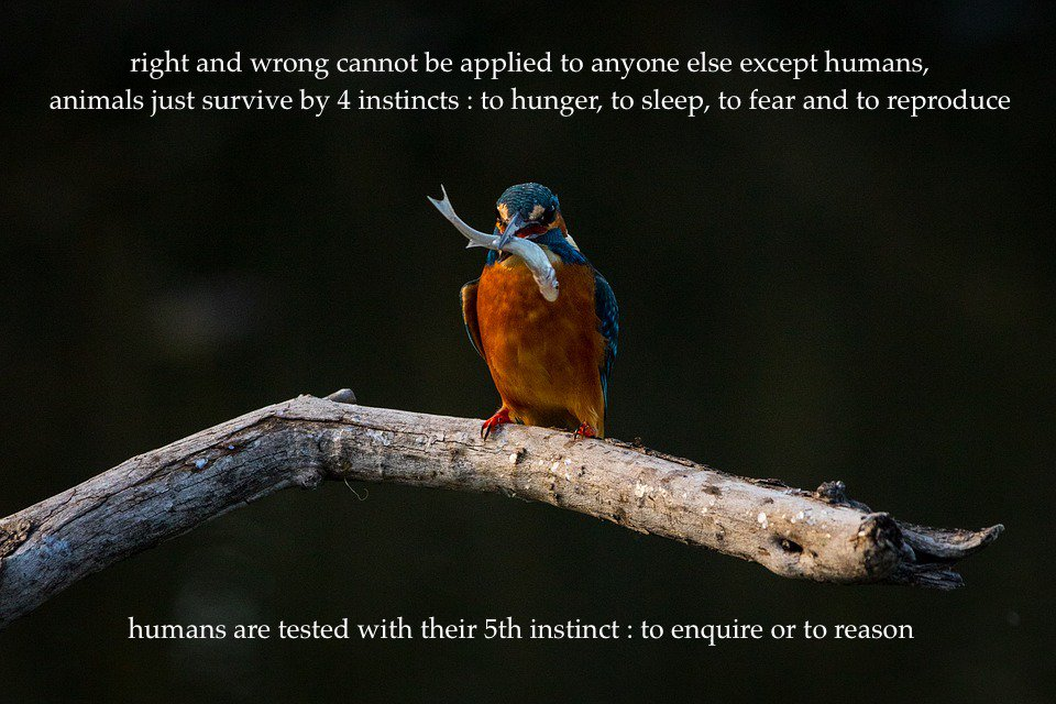 #animals #survive #humans #enquire https://t.co/rmGBhyk4JM