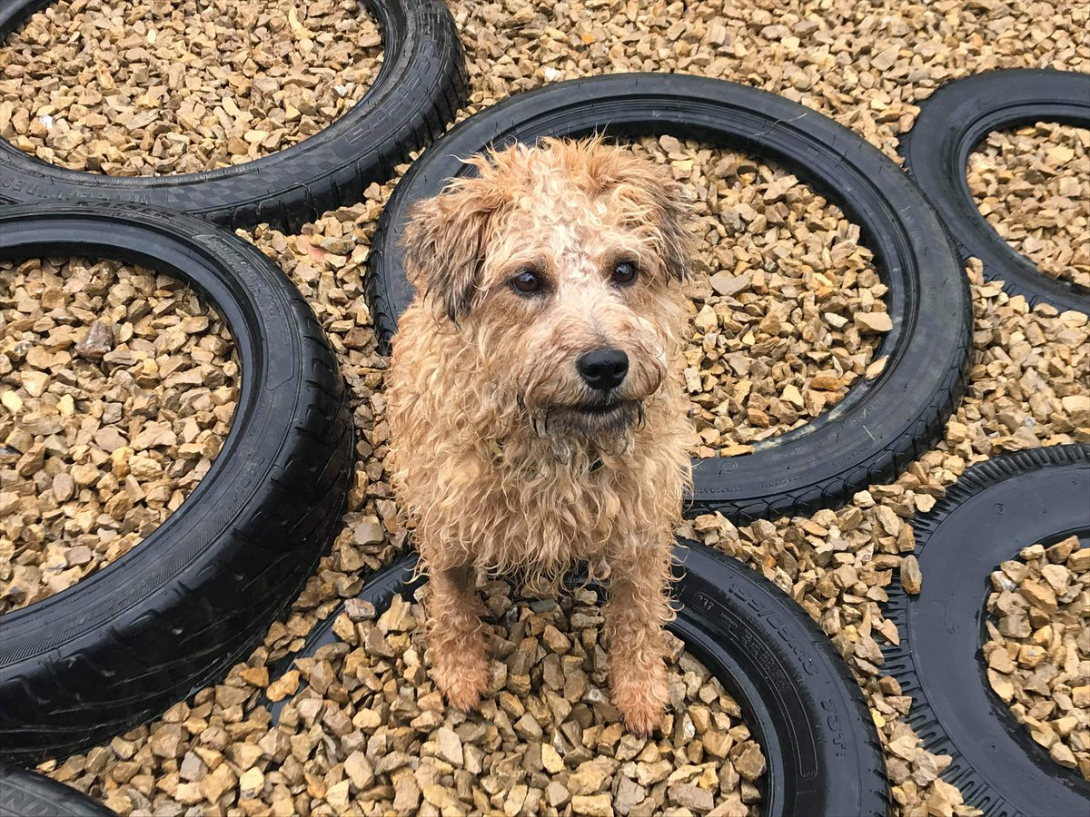 What heatwave???  Asks a very bedraggled NINA on a very wet Tuesday morning. Can anyone else smell damp dog right now? #dogstrustdarlington #dampdog #rainyday #walksintherain #wetdog @DogsTrust #dogsoftwitter <br>http://pic.twitter.com/Ny2v84uhD4
