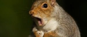 The Squirrel Census Answers a Question You Weren't Asking - #nature #humor https://t.co/Fh7KWoostI https://t.co/IhGkB8vAWw