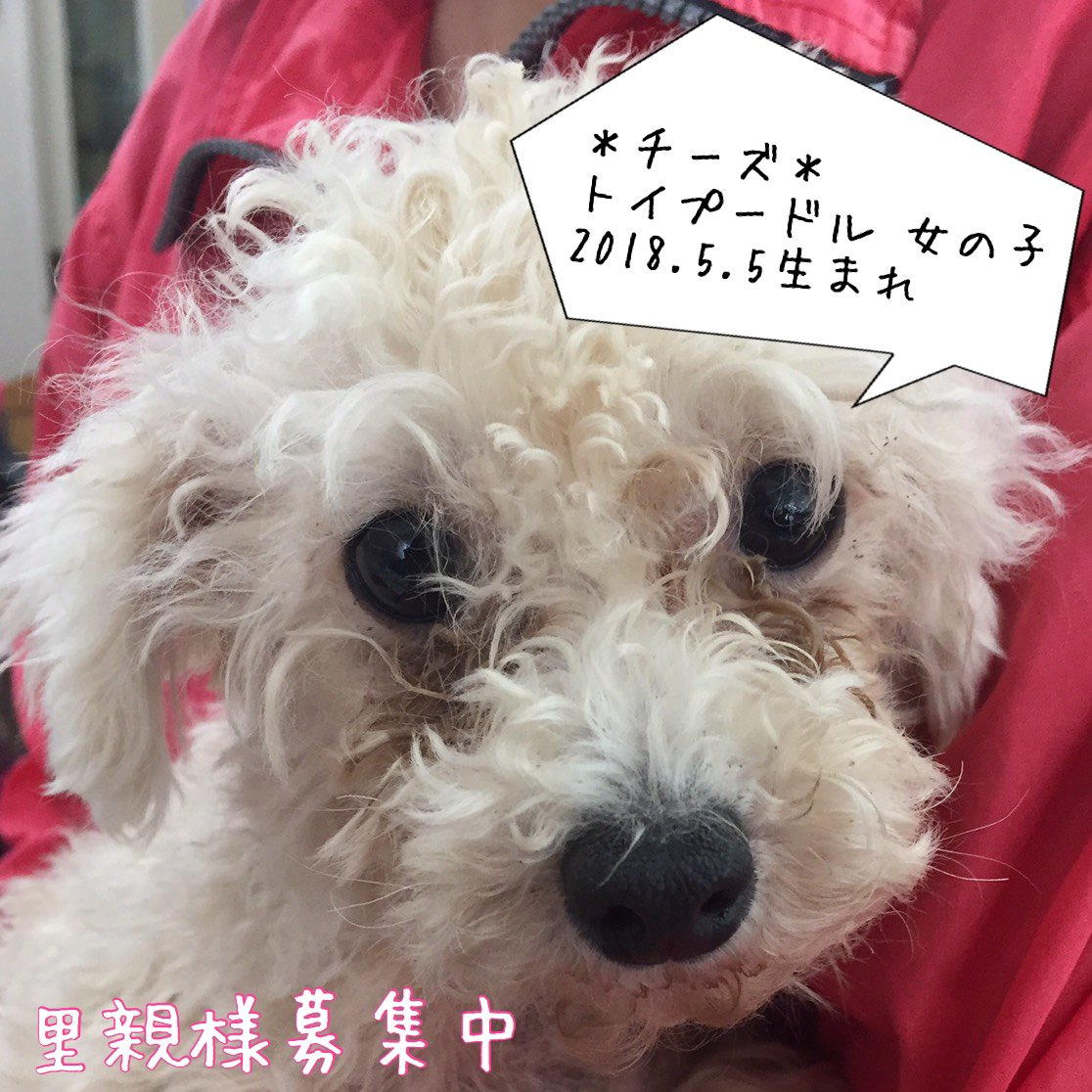 保護犬カフェ 鶴橋店 S Tweet 里親様募集中 本日保護の