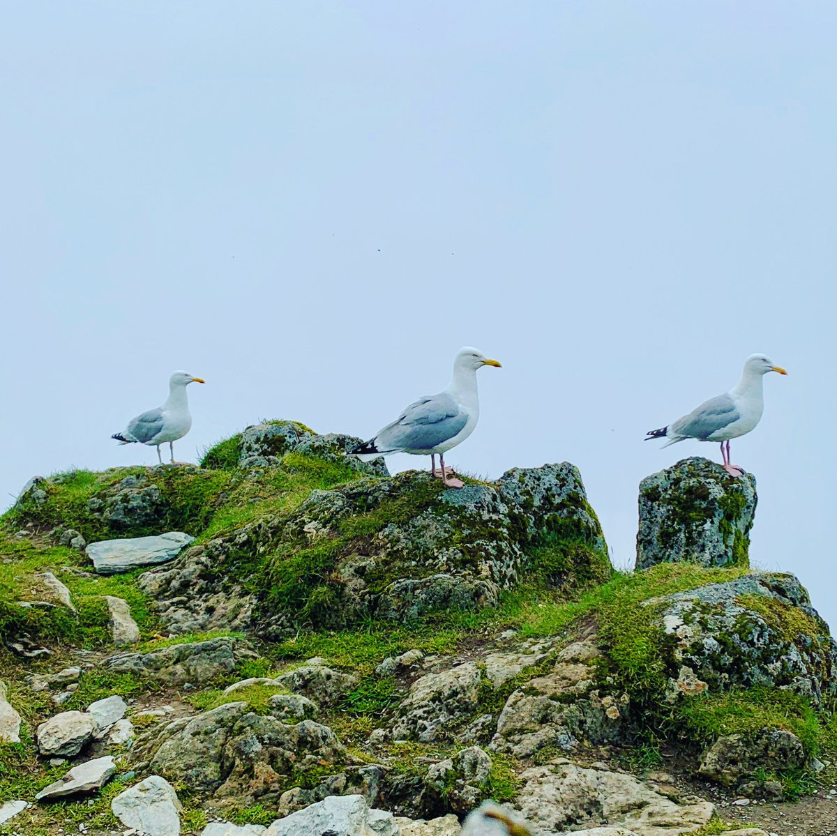 test Twitter Media - #Seagulls standing to attention on #Snowdon summit. https://t.co/vKDCpgN327