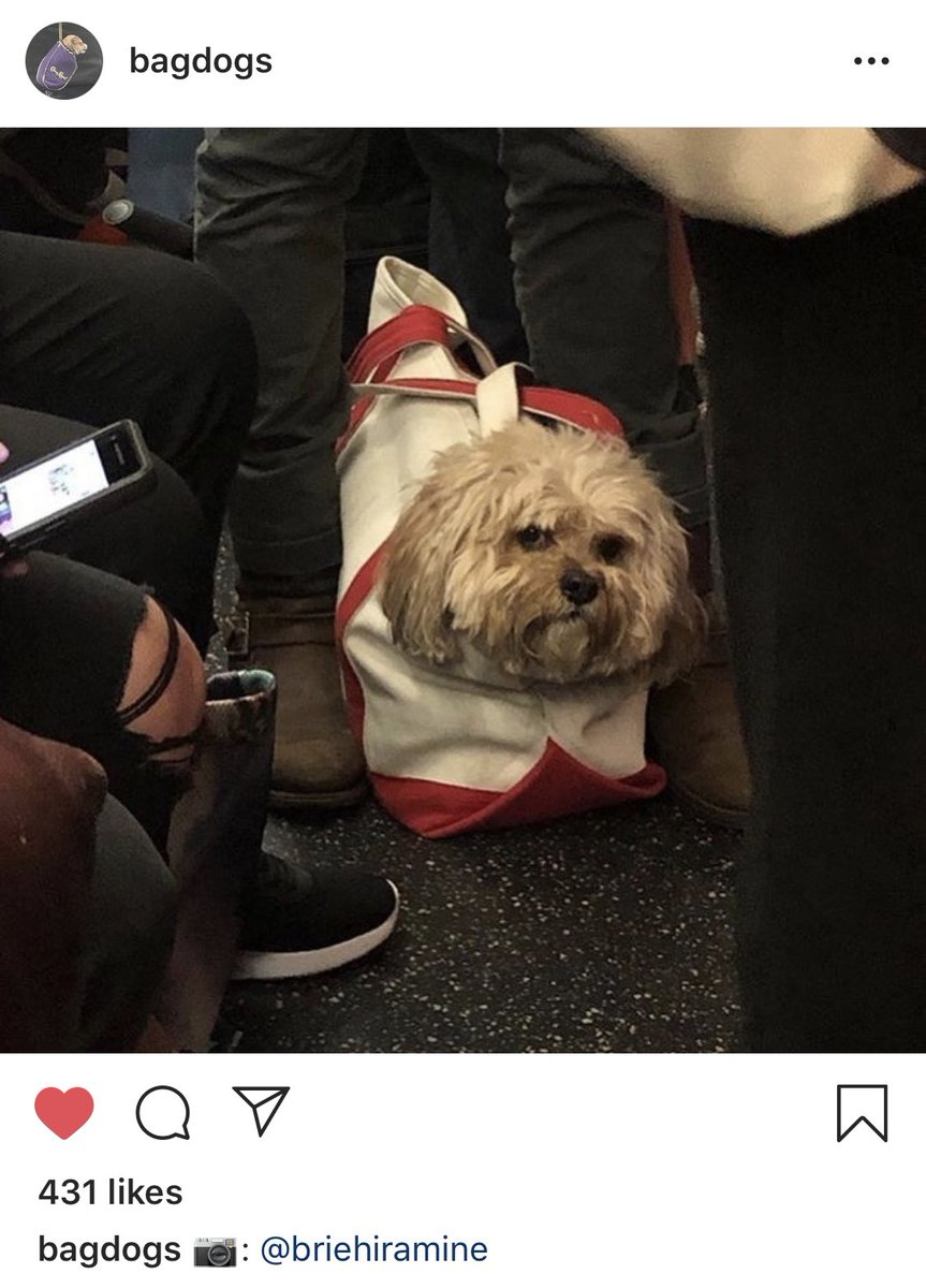 This bag dog on Instagram has such a powerful and relatable energy <br>http://pic.twitter.com/6tIsIAKEwP