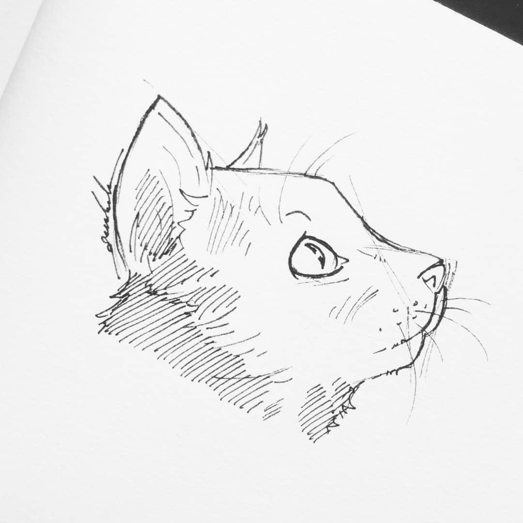 Look up #dailyart #dailyillustration #cat #cats #pets #animals #lookup https://t.co/furKFr37jo