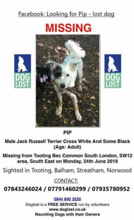 New poster for lost dog Pip. Terrier like Parson Russell  https://www. doglost.co.uk/dog-blog.php?d ogId=145171   …  #missingdog white with black ear patch #lostdog SW17 SW16 SW12 SE27 SOUTH LONDON<br>http://pic.twitter.com/83ONrDAQmS